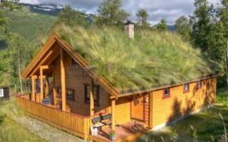 Озеленение крыш: технология строительства зеленой кровли и нюансы посадки растений