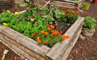 8 оригинальных идей для дачи, о которых мечтает любой садовод