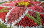 Классификация цветников по типу и периодам цветения