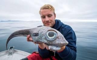 Странная рыба с большими глазами поймалась в Норвегии