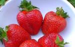 Земляника из семян: полезные советы по выращиванию и уходу