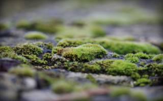 Зеленеет и покрывается налетом земля в теплице — как обеззаразить почву парника
