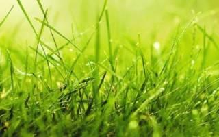 Органический газон: удобряем… отходами кухни и садовой обрезкой