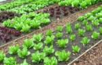 Как правильно ухаживать за рассадой: полив, пикирование, чем укрывать в холод