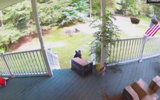 Видео как медведь украл коробку с собачьим кормом