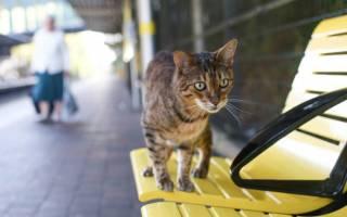 На вокзал Ливерпуля каждый день приходит кот