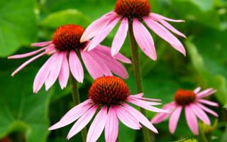 Цветущий газон: выбираем растения для мавританского газона