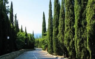 Кипарис: интересные виды, особенности ухода и размножения