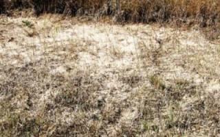 Чем обработать землю от сорняков осенью