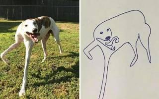 Забавные карикатуры на собак сделали художника знаменитым