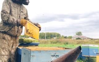 Массовая гибель пчел в Тюмени вызвана пестицидами