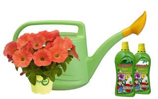 Чем подкормить петунию для обильного цветения и пышного роста — удобрения и время подкормок