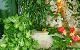 Правильный уход за растениями в зимнем саду поздней осенью: полив, внесение удобрений, освещение и температурные условия. Видео о грамотном Зимнем саде