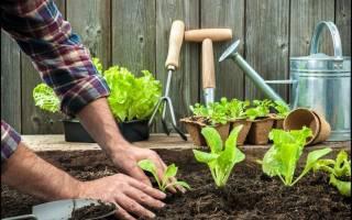 Истощение почвы: причины, как устранить при помощи золы, видео