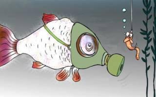 Черепаха глотает пузырьки воздуха от акваланга