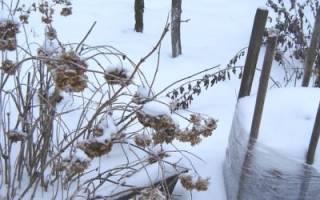 Как подготовить растения к зиме, способы утепления, обработка