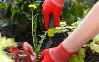 Как избавиться от сорняков на земле