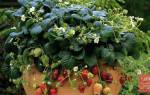 Выращивание земляники из семян — посев, правильный уход
