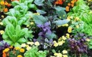 Цветы и овощи на одной грядке