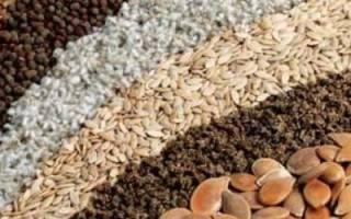 Семена: как хранить семена, как выбирать семена, как подготовить к посеву + Видео