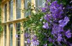 Растения, используемые для озеленения: виды и способы использования