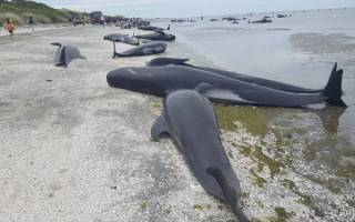 Дельфины выбросились на берег причина неясна