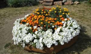 Растения с грядки, которые стоит перенести на зиму домой