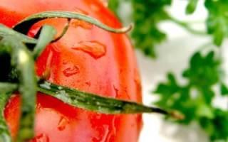 Как вырастить хороший урожай помидоров: выращивание рассады из гибридных семян
