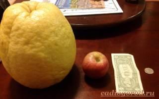 Лимон размножение, посадка, уход.