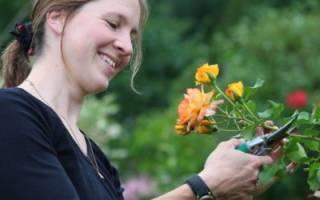 Как обрезать розы весной (вьющиеся, плетистые и пр) — способы на фото и видео