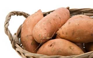 Картофель Лапоть: описание сорта с фото, правила выращивания и отзывы
