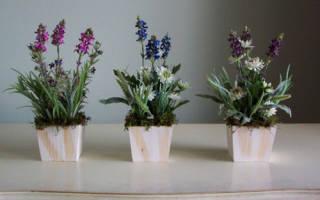 Какие цветы нельзя держать дома и почему: объективные причины и приметы