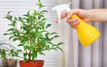 5 частых ошибок цветоводов и как их избежать