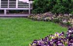 Однолетние цветы для клумбы: как правильно выбрать и вырастить