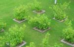 Планировка сада и огорода: примеры планировки сада на небольшом участке земли