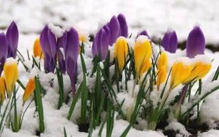 Весенние работы в саду и огороде: что делать в марте