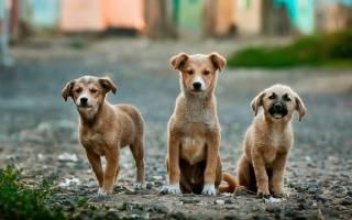 Бездомных животных будут передавать в приюты