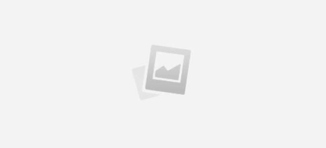 Живая изгородь из шиповника: как создать цветущий забор своими руками